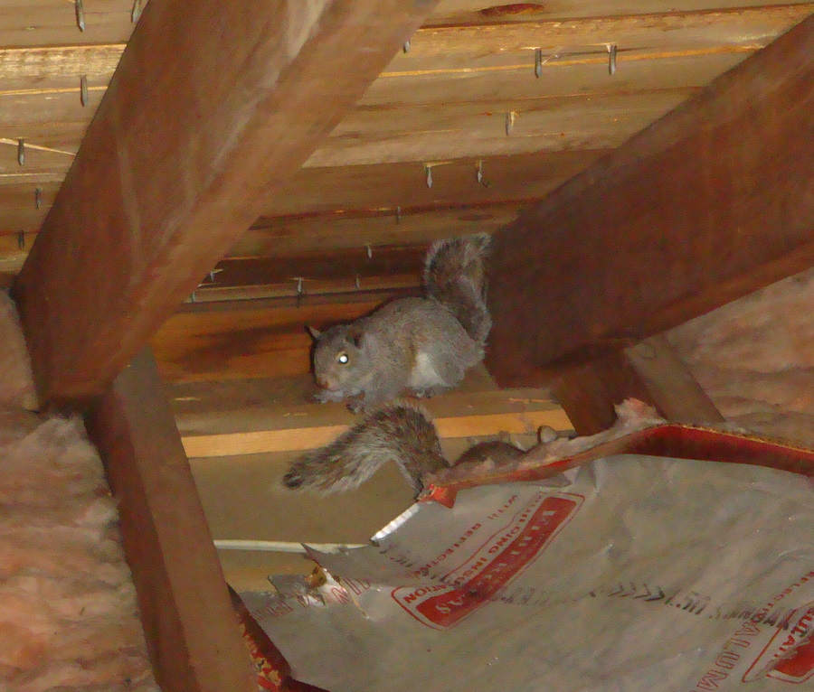Types Of Roof Damage By Rodents